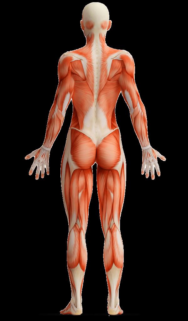 Ganzheitliche Physiotherapie für langfristige Behandlungserfolge
